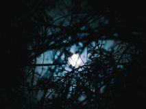 Måneskuggan Royaltyfria Bilder
