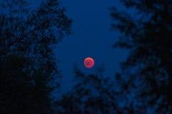Månförmörkelse som inramas beautifully av träd Fotografering för Bildbyråer