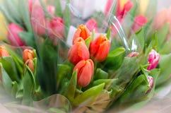 Mång--färg buketter av tulpan - bästa sikt royaltyfri foto