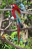 Mång--färgad ara på filial Royaltyfri Bild