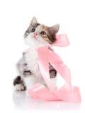 Mång--färgad kattunge med ett rosa band Arkivbilder