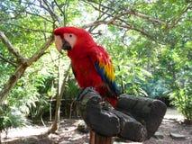 Mång--färgad papegoja Fotografering för Bildbyråer