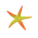 Mång--färgad sjöstjärna Arkivfoton