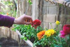 Mång--färgade blommor i flowerbad arkivbilder
