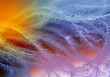 Mång--färgade droppar på mjuka fjädrar Arkivfoton