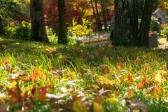 Mång--färgat lövverk och grönt gräs på en solig höstdag i Upstate New York royaltyfri foto