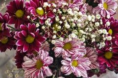 Mång- färgbukett med sådan blomma som dahlia och krysantemum Royaltyfria Bilder
