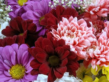 Mång- färgbukett med sådan blomma som dahlia och krysantemum Arkivfoton