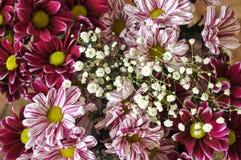 Mång- färgbukett med sådan blomma som dahlia och krysantemum Royaltyfri Bild