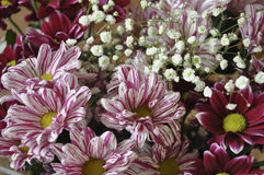Mång- färgbukett med sådan blomma som dahlia och krysantemum Fotografering för Bildbyråer
