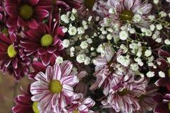 Mång- färgbukett med sådan blomma som dahlia och krysantemum Royaltyfri Foto