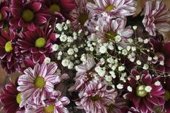 Mång- färgbukett med sådan blomma som dahlia och krysantemum Arkivbilder