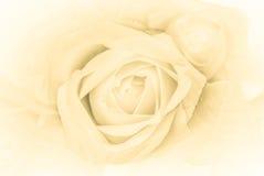 Mång- kulör bakgrund för tusenskönablommamodell bakgrundsdroppar blommar isolerat över white för rose vatten Blom- bakgrund med d Arkivbild