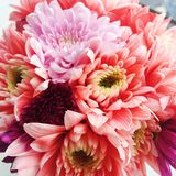 Mång- kulör krysantemumblomma Royaltyfria Bilder