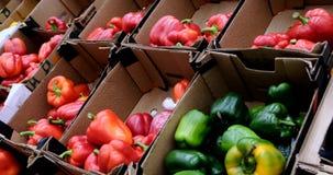 Mång- kulör spansk peppar som förläggas på hyllor på den konventionella marknaden, 4k stock video