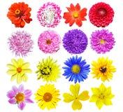 mång- kulöra blommor Royaltyfria Foton