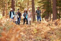 Mång- utvecklingsfamilj som fotvandrar i en skog, förgrundsutrymme arkivfoton
