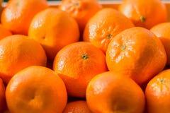 Många apelsiner och tangerin i ett rede royaltyfria foton