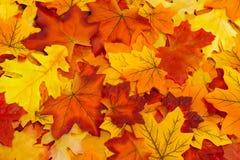 Många Autumn Leaves Arkivbilder