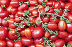 Många av saftiga mogna röda tomater Arkivbild