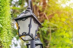 Många avmaskar guling klättring lampan under trädet Royaltyfria Foton
