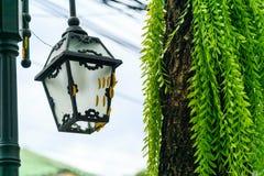Många avmaskar guling klättring lampan under trädet Arkivfoton