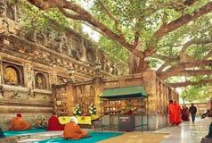 Många böner som sitter runt om det Bodhi trädet, som buddhaen blev upplyst arkivbild