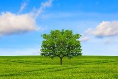många begreppsekologibilder mer min portfölj Träd, fält och härlig himmel royaltyfri fotografi