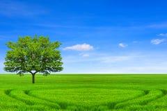 många begreppsekologibilder mer min portfölj Träd, fält och härlig himmel royaltyfri foto