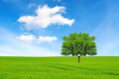 många begreppsekologibilder mer min portfölj Träd, fält och härlig himmel arkivbild