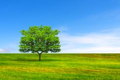 många begreppsekologibilder mer min portfölj Träd, fält och härlig himmel arkivbilder