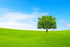 många begreppsekologibilder mer min portfölj Träd, kullar och härlig himmel Royaltyfri Bild