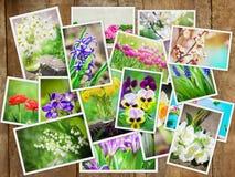 Många bilder av blommor collage arkivbild