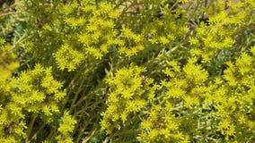 Många bin på blommor arkivfilmer