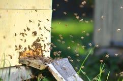 Många bin som skriver in en bikupa Arkivfoto