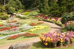 Många blommar i blommaträdgård Arkivbilder