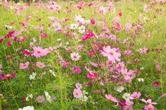 Många blommaträdgård Fotografering för Bildbyråer