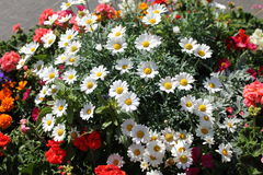 Många blommor Arkivbild
