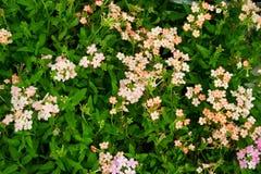 Många blommor arkivfoton
