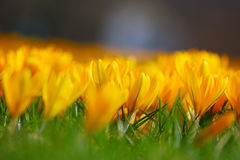 Många blommor Royaltyfri Fotografi