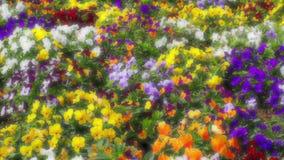 Många blommor: färgrika pansies lager videofilmer