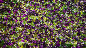Många blommor i sommar arkivbild