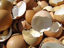 Många brutna äggskal som återanvänds för composting royaltyfria foton