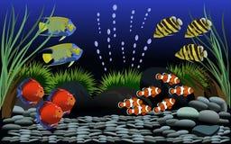 Många dekorerade den härliga fisken i fiskbehållare med grus och små träd royaltyfri illustrationer