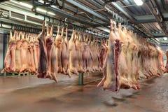 Många djupfrysta grisköttkadaver som hänger i det kalla lagret för krok royaltyfria foton