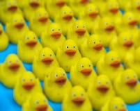 Många Ducky Toy Little Yellow Rubber Duck badleksak Selektivt fokusera arkivfoto
