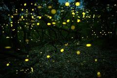 Många eldflugor i sommaren på den felika skogen Arkivbild