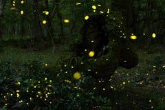 Många eldflugor i sommaren på den felika skogen Royaltyfri Foto
