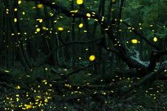 Många eldflugor i sommaren på den felika skogen Royaltyfria Bilder