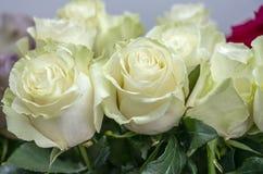 Många en vit rosa closeup för försiktig blomma arkivbild
